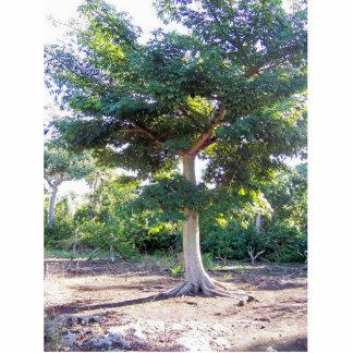 Tree of Wisdom-photo sculpture