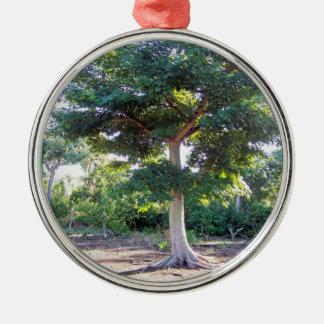 Tree of Wisdom-prem round ornament