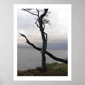 Tree off Oban Scotland Poster