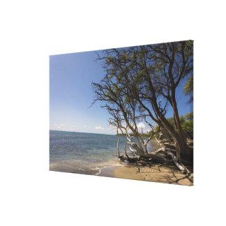Tree On A Beach Along The Coastline Canvas Print