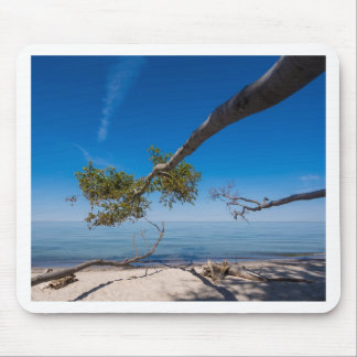 Tree on a beach on shore of the Baltic Sea Mouse Pad