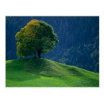 Tree on a Hill Postcard