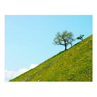 Tree on a Steep Hill Postcard
