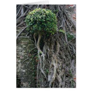 Tree on a wall, Anping Fort, Tainan, Taiwan Card