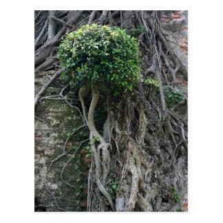 Tree on a wall, Anping Fort, Tainan, Taiwan Postcard
