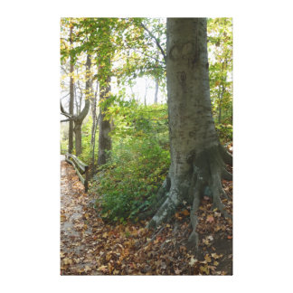 Tree on Wooded Path, Nature Scene Canvas Print