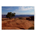 Tree Out of Red Rocks at Canyonlands National Park Card