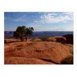 Tree Out of Red Rocks at Canyonlands National Park Postcard