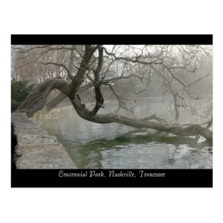 Tree Over Water Postcard