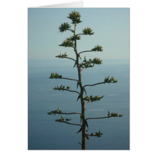 Tree overlooking the Meditteranean Sea Cards