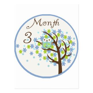 Tree Owl Milestone Month 3 Postcard