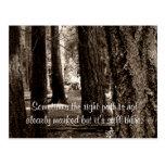 TREE PATH POST CARD