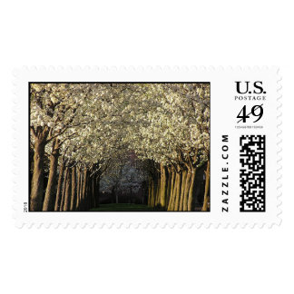 Tree path stamps