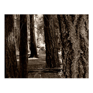 TREE PATH POSTCARD