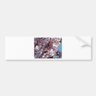 tree,pink blossoms on tree bumper sticker