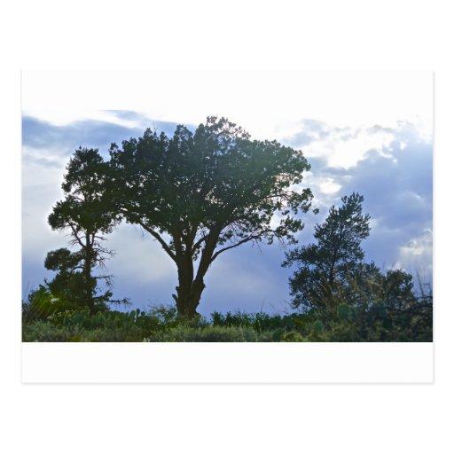 Tree Post Cards