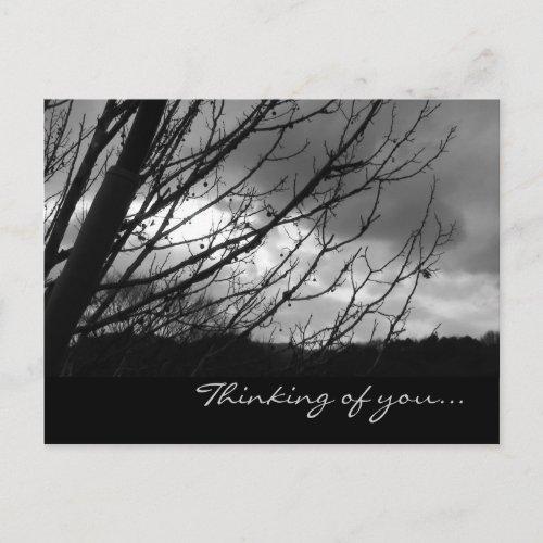Tree PostCard postcard