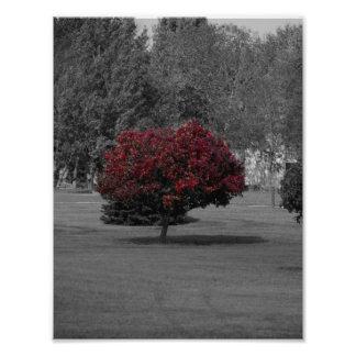 Tree print photo art