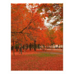 Tree Red Autumn Leaves Personalized Letterhead