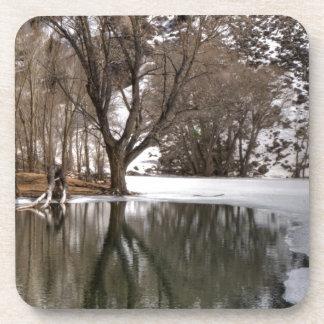 Tree Reflection Beverage Coasters