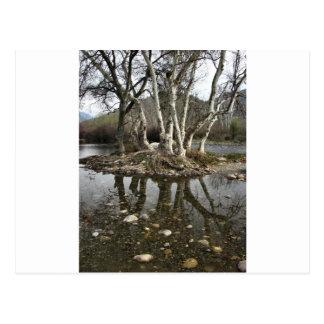 tree reflection postcard