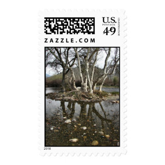 tree reflection stamp