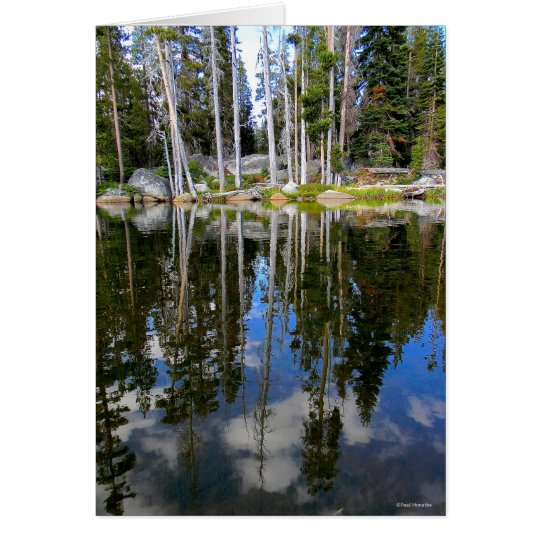 Tree Reflections Card