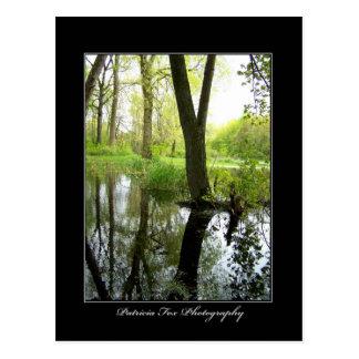 Tree Reflections - Postcard