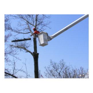 Tree Removal postcard
