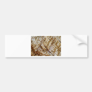 Tree Ring Layers Bumper Sticker
