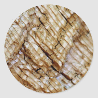 Tree Ring Layers Classic Round Sticker