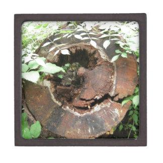 Tree Ring Spring Photo Premium Gift Boxes