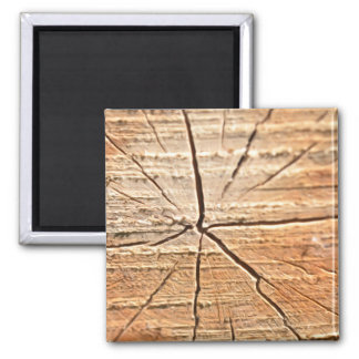 Tree Rings 2 Inch Square Magnet