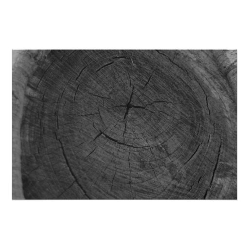 Tree rings in black and white poster