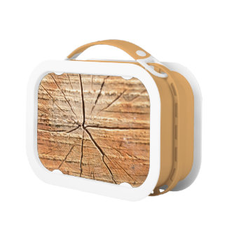 Tree Rings Lunch Box