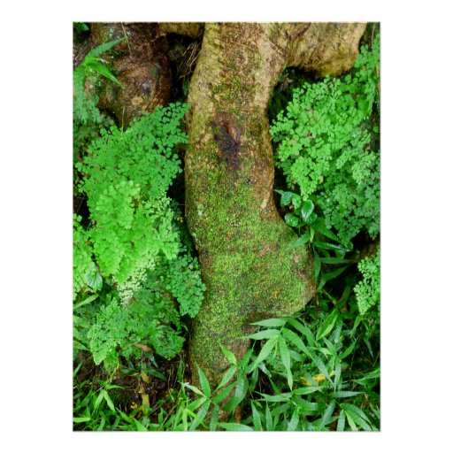 Tree root and ferns poster