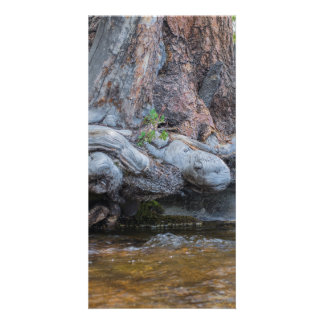 Tree Roots In The Water Stream Card