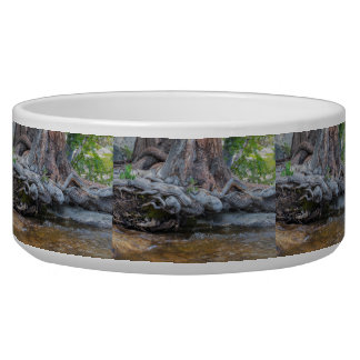Tree Roots In The Water Stream Dog Water Bowls