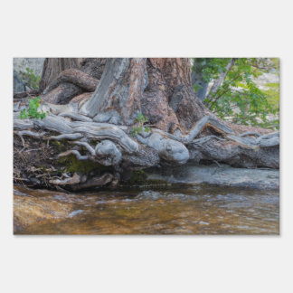 Tree Roots In The Water Stream Lawn Sign