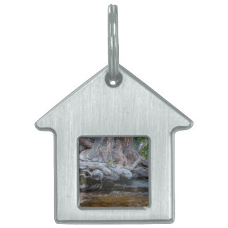 Tree Roots In The Water Stream Pet Name Tag