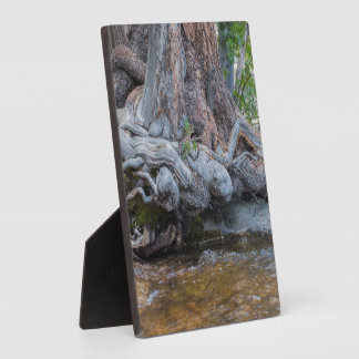 Tree Roots In The Water Stream Plaque