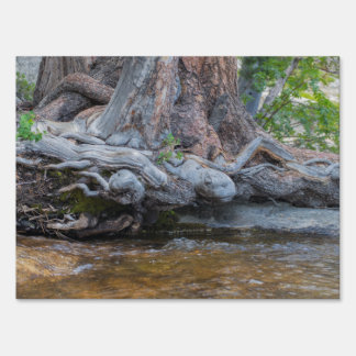 Tree Roots In The Water Stream Sign
