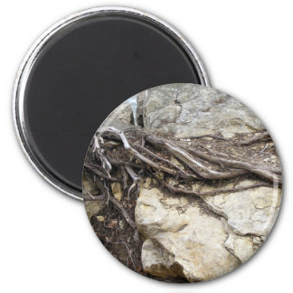 Tree roots magnet