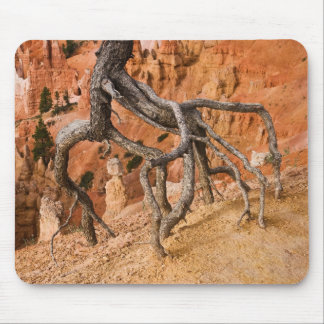 Tree Roots Mouse Pad