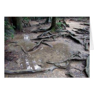 Tree roots on Mt. Kurama Greeting Card