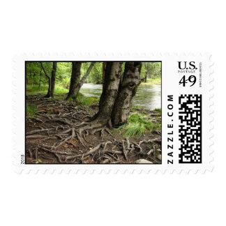 Tree roots postage stamp