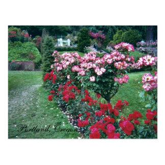 Tree Roses, Portland, Oregon Postcard