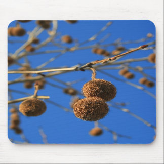 Tree Seed Pods Mousepad