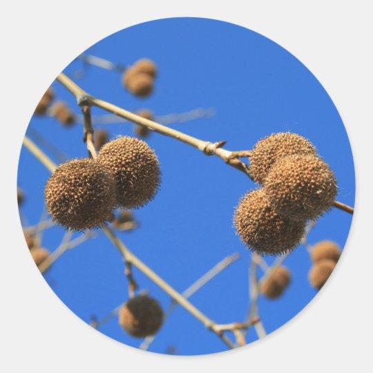 Tree Seed Pods Sticker