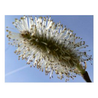 Tree Seed Postcard